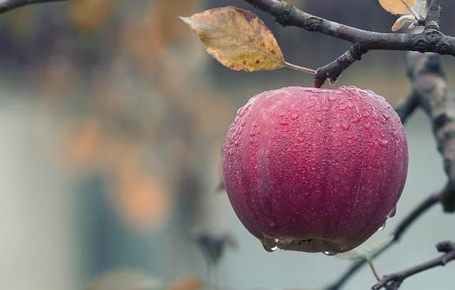Bio Apfel