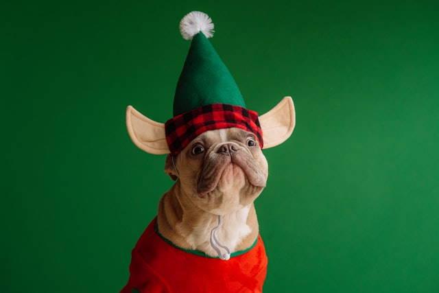 Weihnachtspulli lustig