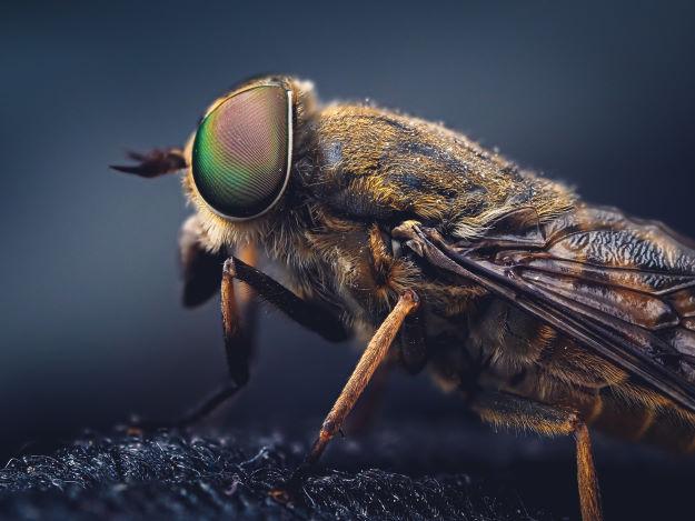 insekten bekaempfen tipps (8)