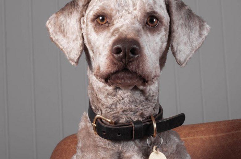 Hundehalsband zu verschenken